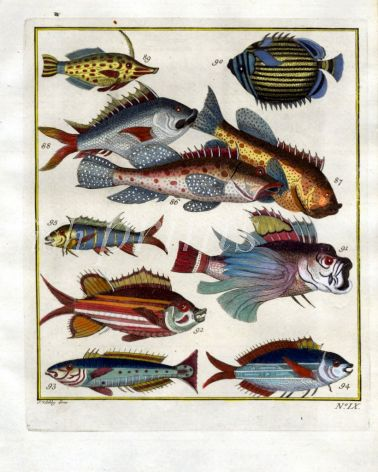 PLATE NINE: EXTRAORDINARY FISHES OF AMBON - LONG-SNOUTED TRIGGERFISH, MELON BUTTERFLYFISH, GROUPER print
