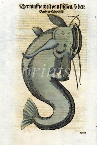 1598 GESNER FISH PRINT - THE CATFISH
