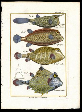 COW, TRUNK & TURRET FISH print