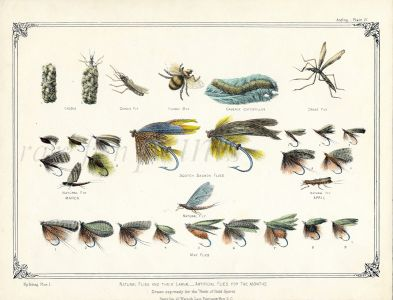 FLY FISHING: TROUT & SALMON NATURAL FLIES AND THEIR LAVA - ARTIFICIAL FLIES FOR THE MONTHS  fishing print