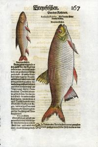 1598 GESNER FISH PRINT - THE ROACH