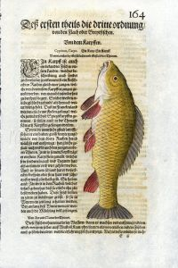 1598 GESNER FISH PRINT - THE COMMON CARP