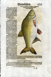1598 GESNER FISH PRINT - THE BRONZE BREAM