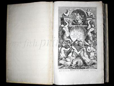 """""""HISTORIA NATURALIS''  JONSTON & MERIAN 1657"""