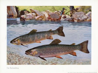 WAGNER - THE BROOK TROUT print