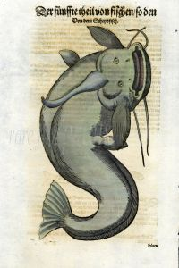 1598 GESNER FISH PRINT - THE CATFISH