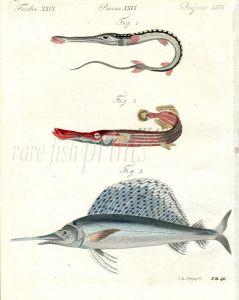 THE TOBACCO PIPE FISH, TRUMPETFISH, SAILFISH print