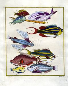 PLATE EIGHT: EXTRAORDINARY FISHES OF AMBON - TWO-LINED MONOCLE BREAM, SLING-JAW WRASSE print