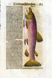 1598 GESNER FISH PRINT - THE ATLANTIC SALMON - MALE