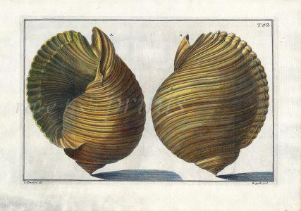 GUALTIERI - CONCHOLOGY: TAB 42 SHELL print 1742