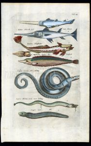 MERIAN & JONSTON - SAWFISH, SWORDFISH, REMORA, SEA SERPENT print