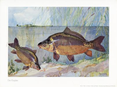 WAGNER - THE MIRROR CARP print
