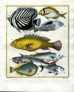 PLATE FIFTEEN: EXTRAORDINARY FISHES OF AMBON - TRIANGULAR BUTTERFLYFISH, VERMILLION GROUPER, BONITO print