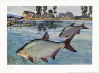 WAGNER - THE SILVER BREAM print