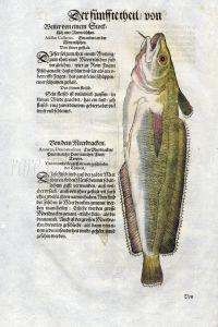 1598 GESNER FISH PRINT - THE HAKE