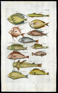 MERIAN & JONSTON - BRAZILIAN FISH SOUTH AMERICA - ANGELFISH,  ARMOURED CATFISH  1657