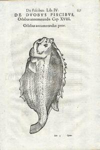 ALDROVANDI - LUMPFISH print 1638