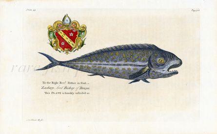 HUGHES/EHRET - THE NATURAL HISTORY OF BARBADOS 1750 - THE DOLPHIN FISH print (DORADO/MAHI-MAHI)