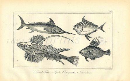 BUFFON/DAVENPORT - SWORD FISH, OPAH, DRAGONET & JOHN DORY print 1821