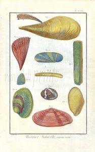 DIDEROT/MARTINET: PL. LXXI COQUILLES DE MER - SEA  SHELLS 1768