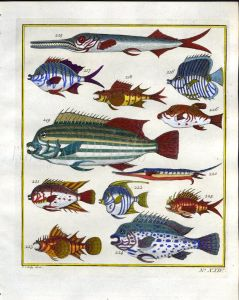 PLATE TWENTY FOUR: EXTRAORDINARY FISHES OF AMBON - NEEDLEFISH, SHARPNOSE PUFFER, LINED SWEETLIPS print