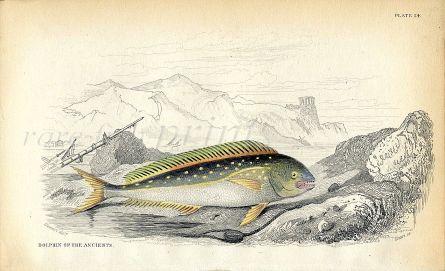 JARDINE/LIZARS - THE DOLPHIN OF THE ANCIENTS fish print 1843