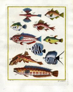 PLATE TWENTY SIX: EXTRAORDINARY FISHES OF AMBON - LITTLE SEA DRAGON, TRIGGERFISH, BUTTERFLYFISH, PIED HUNTER print