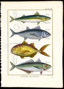 MACKEREL & BLUEFIN TUNA print