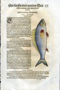 1598 GESNER FISH PRINT - THE PICAREL