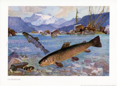 WAGNER - THE BROWN TROUT print