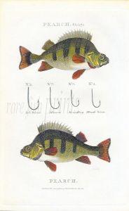 SCOTT/BUNNEY & GOLD - PERCH fishing print 1801