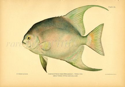 THE SPADEFISH print