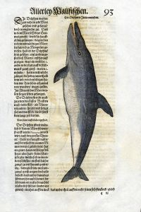 1558 GESNER FISH PRINT - THE DOLPHIN