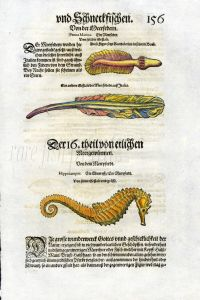 1598 GESNER FISH PRINT - THE SEAHORSE