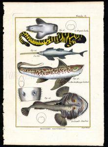 LEOPARD SHARK, SAWFISH, CHIMAERA & MONKFISH print