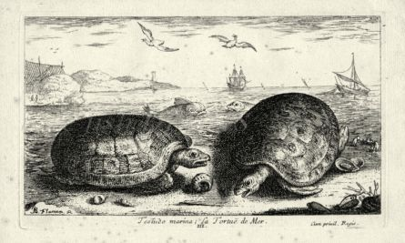 LA TORTUE DE MER - THE SEA TURTLE engraving