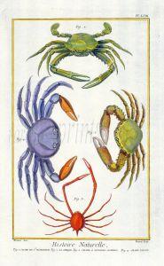 DIDEROT/MARTINET CRABS: ST. DOMINIGUE (HAITI), LA SIRIQUE, SPIDER & VIOLET CRABS 1768