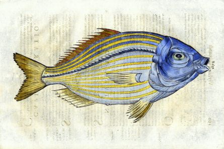 ALDROVANDI - THE HALLUCINOGENIC BREAM print (Salpa)