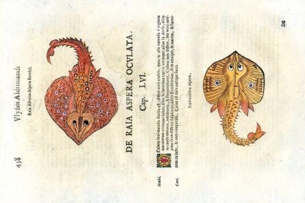 ALDROVANDI - THE SKATE & RAY print