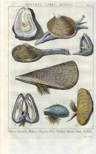 DEZALLIER - CONCHOLOGY: PL. 5 - BIVALVES - OYSTER, PEN, MUSSEL shell print
