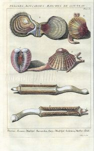 DEZALLIER - CONCHOLOGY: PL.6 MARINE BIVALVES - SCALLOPS, COCKLES, RAZOR CLAMS shell print