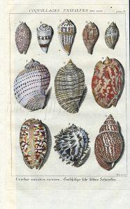 DEZALLIER - CONCHOLOGY: PL.11 VERY RARE SHELLS - TOP, TURBAN, MUREX, CONE shell print