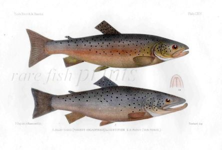 THE LOCH STENNIS & FERROX TROUT print