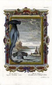 HAMMERHEAD SHARKS ENGRAVING - JOHANN JACOB SCHEUCHZER: PHYSICA SACRA 1735 - 1735