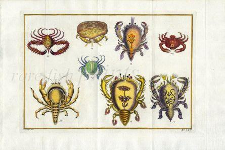 SCHLEY/PREVOST - CRUSTACEA D' AMBOINE crab print