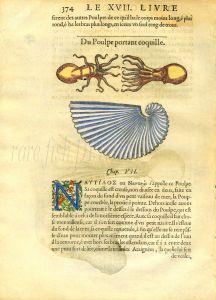 RONDELET - PAPER NAUTILUS & ARGONAUT OCTOPUS woodcut