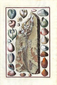 SCHEUCHZER - MARINE LIFE: PHYSICA SACRA FOSSILS TAB LVII - FISH & SHELLS print