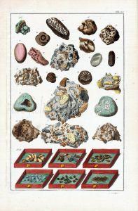 SEBA - MARINE LIFE: DIVERS FOSSILS print