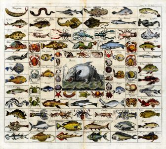 JOHANN ZAHN'S 90 IMAGES OF SEA MONSTERS, FISHES, WHALES & MARINE LIFE - VERY RARE ORIGINAL FIRST EDITION FOLIO ENGRAVING 1696
