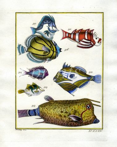 PLATE THIRTY FOUR: EXTRAORDINARY FISHES OF AMBON - BOARFISH, SCORPIONFISH, FILEFISH, LONGHORN COWFISH print